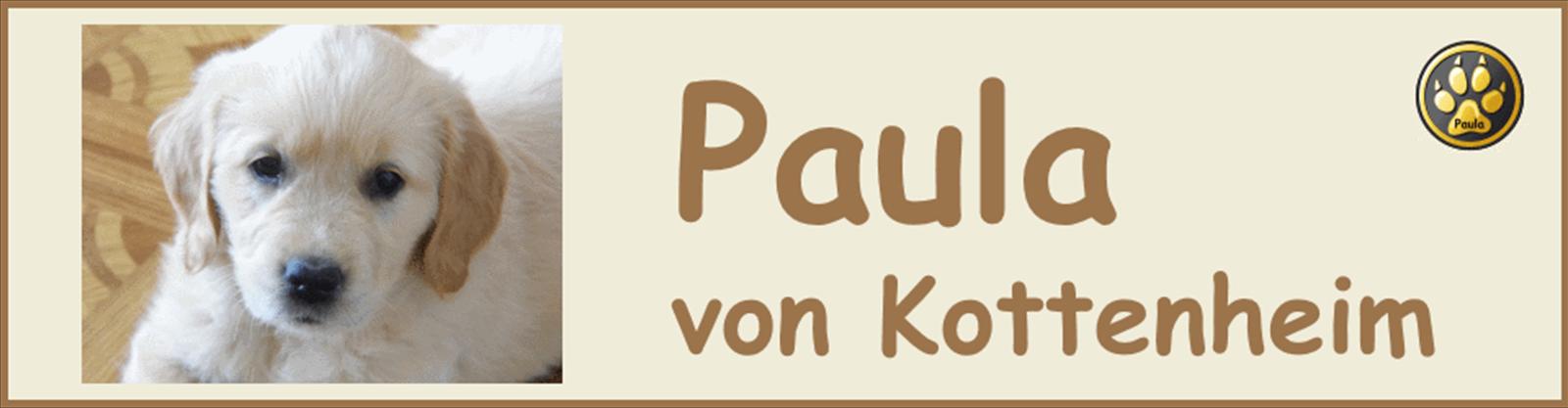 Paula-Banner-01